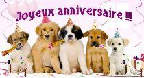 heureux anniversaire chien