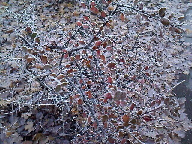winterig