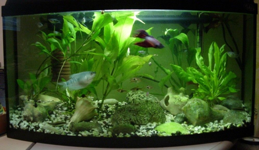 Decorate The Aquarium With Pieces Or Objects That Resemble The Ancient  Roman Parthenon, Replicas Of