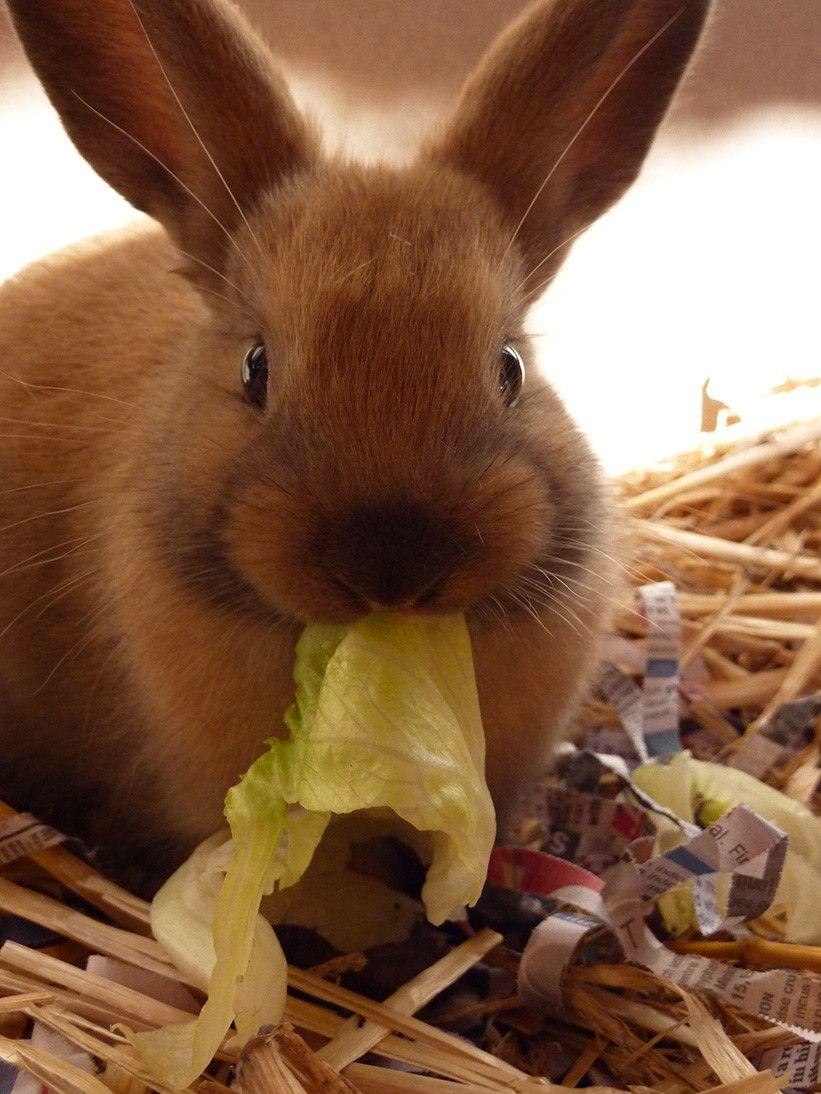 смешные кролики фото стикеры декор позволяет скрыть