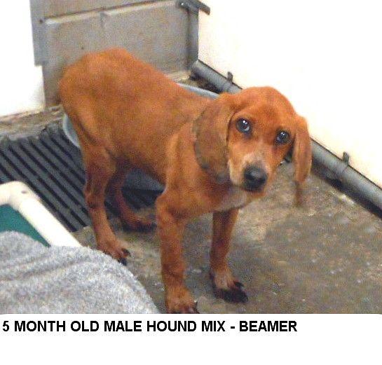 04 21 2016 Super Urgent Puppy Alert Dies On 04 23 16 Adopt