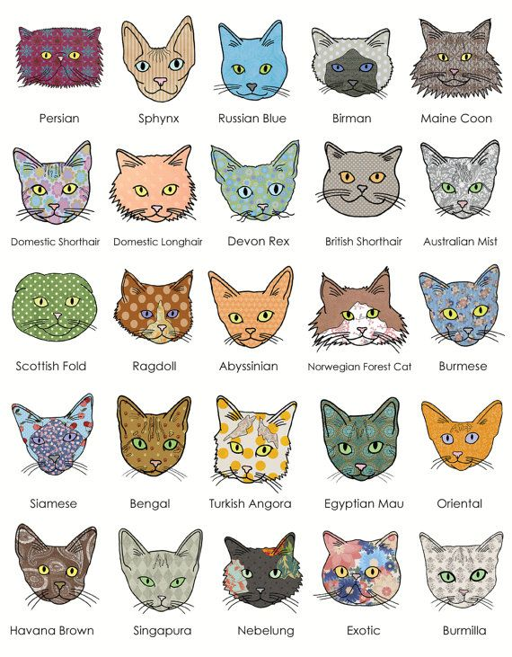 Cat Breeds Poster By Sarah Menzies Design On Etsy I Love Cats