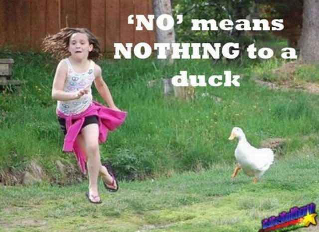 Words to live by ....when dealing with a duck that is.