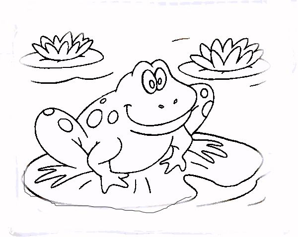 Frogs Frog Coloring Pages Animal Coloring Pages Coloring Pages