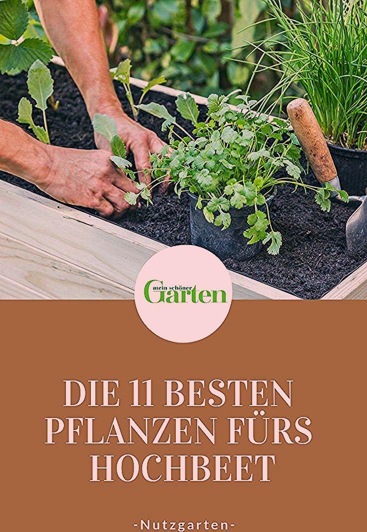 Photo of Die 11 besten Pflanzen fürs Hochbeet