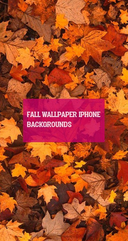 fall wallpaper iphone backgrounds
