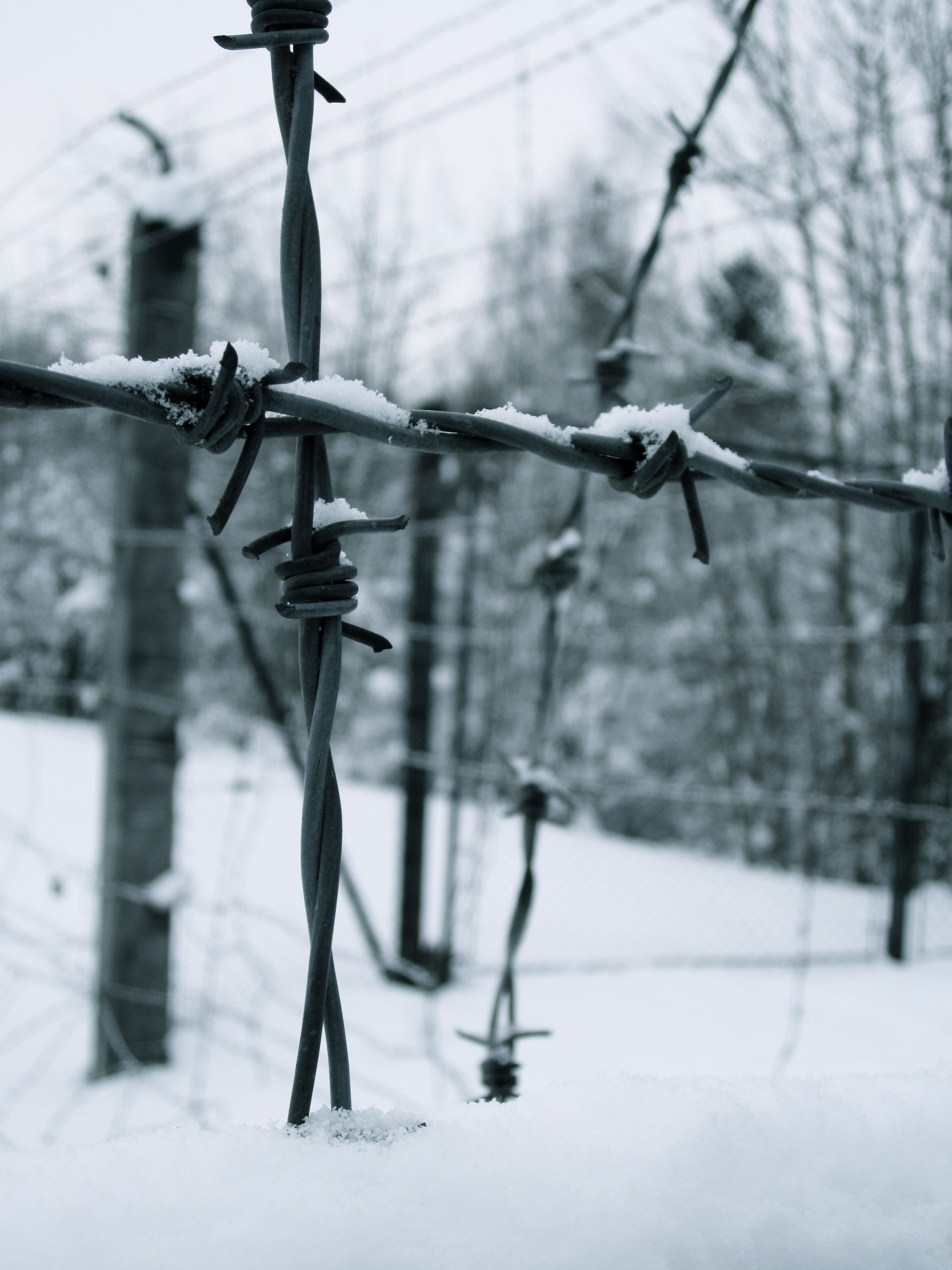 Barbed wire fence at Dachau, Germany - 2010 | inside concentration ...