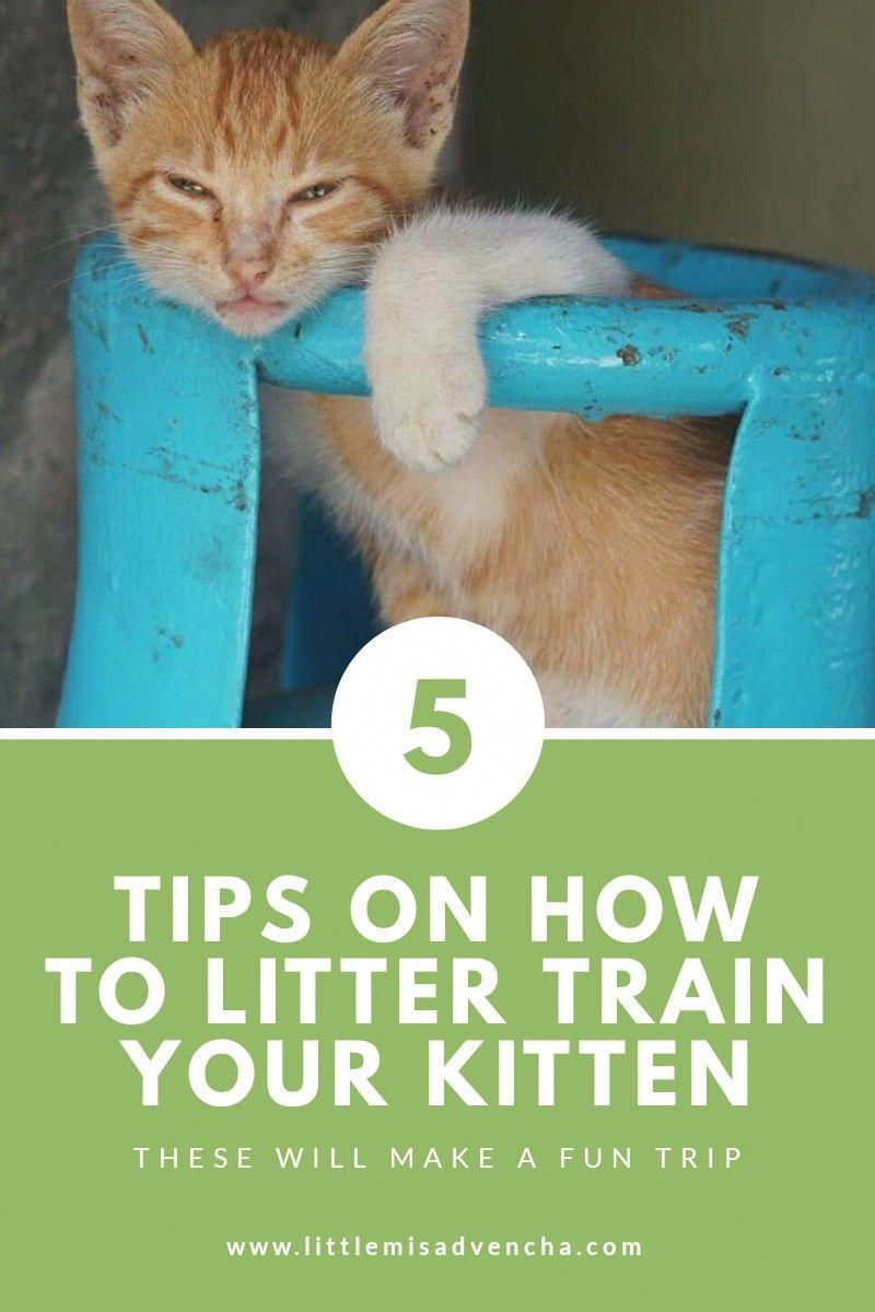 Try These Five Tips On How To Litter Train Your Kitten At Home Litter Training Cat Training Litter Box Training Kittens
