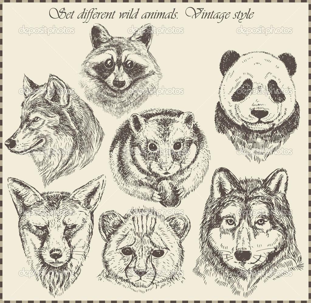Vector set different wild animals various vintage style