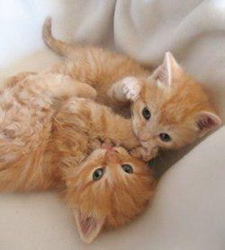 <3 an orange duet <3