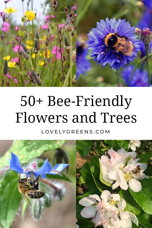 50 Flowers To Grow In A Bee Friendly Garden In 2020 Bee Friendly Garden Pollinator Garden Bee Friendly
