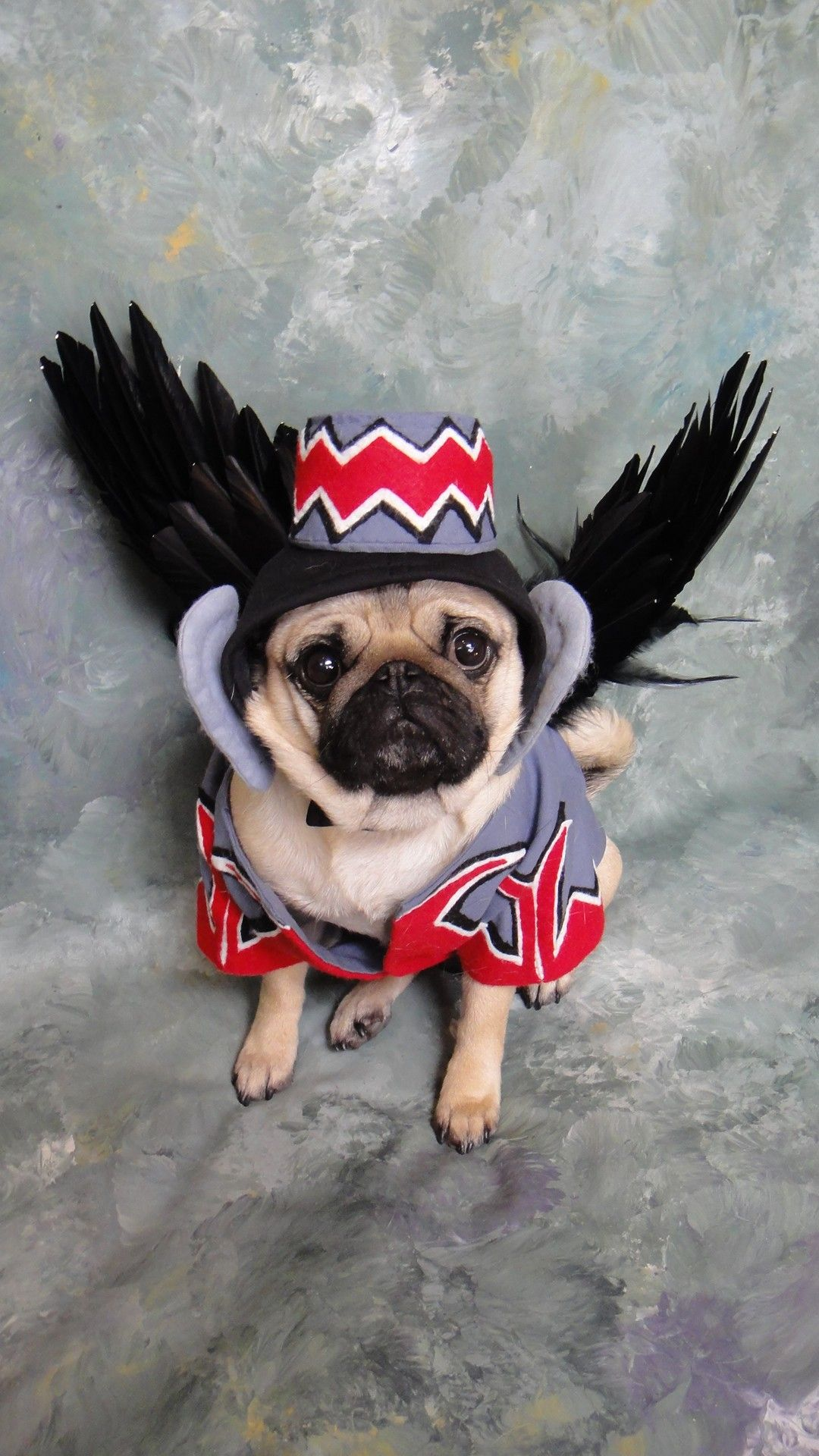 Flying monkey dog costume. Okay, this is just beyond cute. I want ...