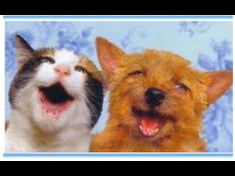 Arcilla curativa para las mascotas. Clay remedy for pets. EcoDaisy - YouTube