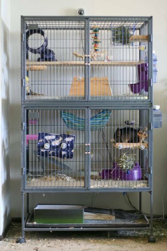 Awesome Two Level Ferret Nation Chinchilla Cage Setup