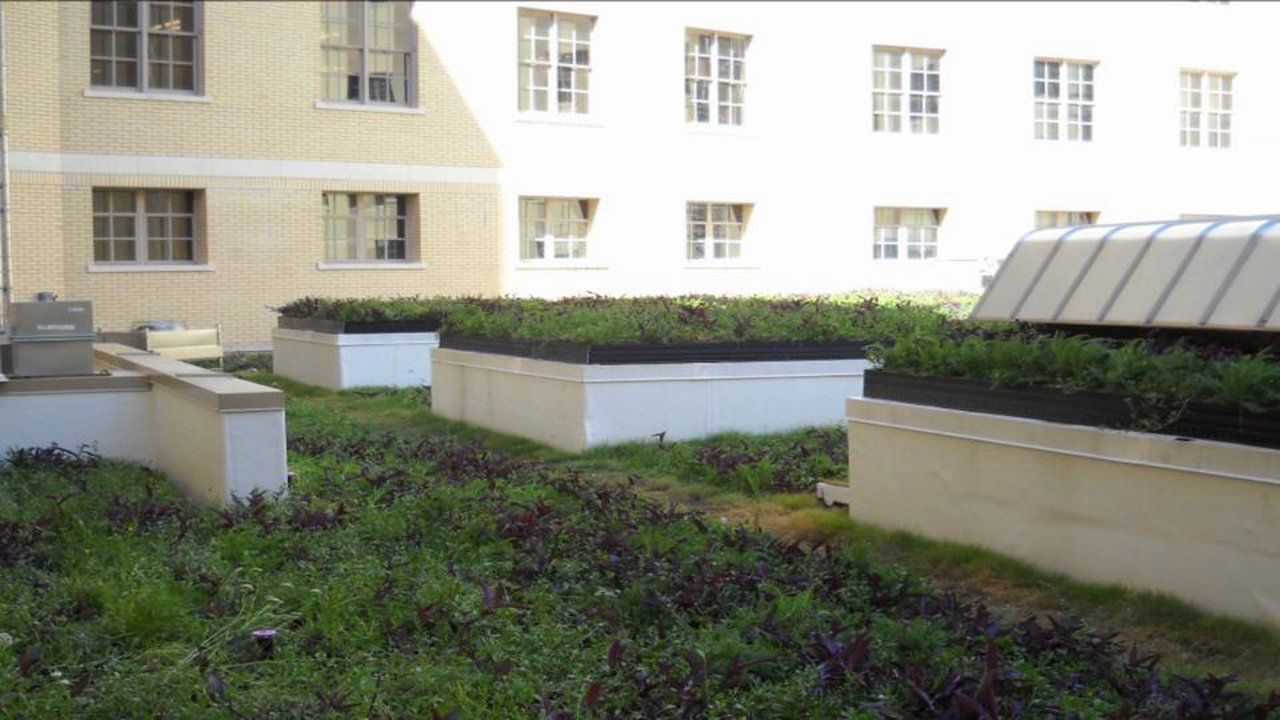 Hipolito f garcia federal building green roof installation on
