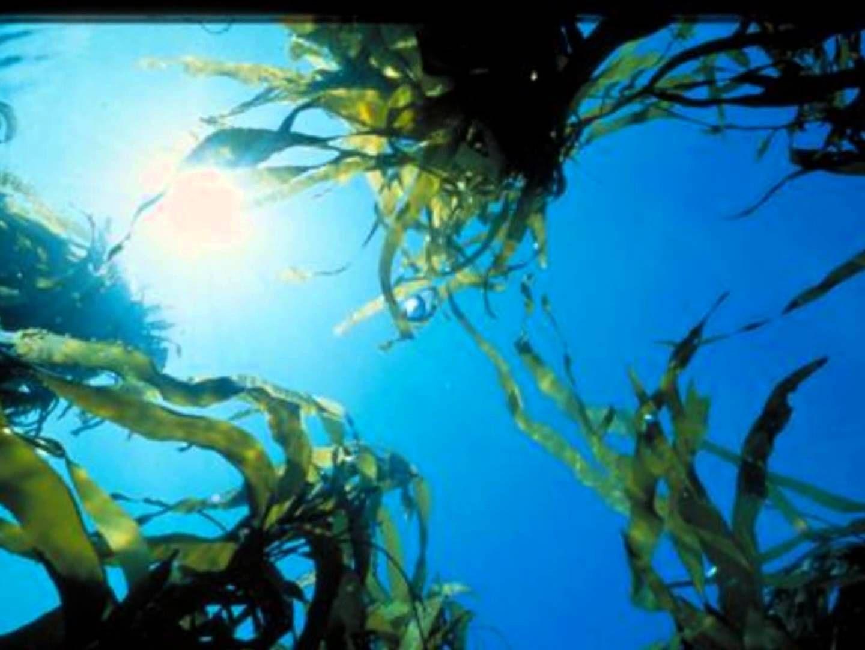 Ocean Photic Zones