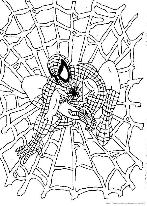 ausmalbilder spiderman23  ausmalbilder für kinder