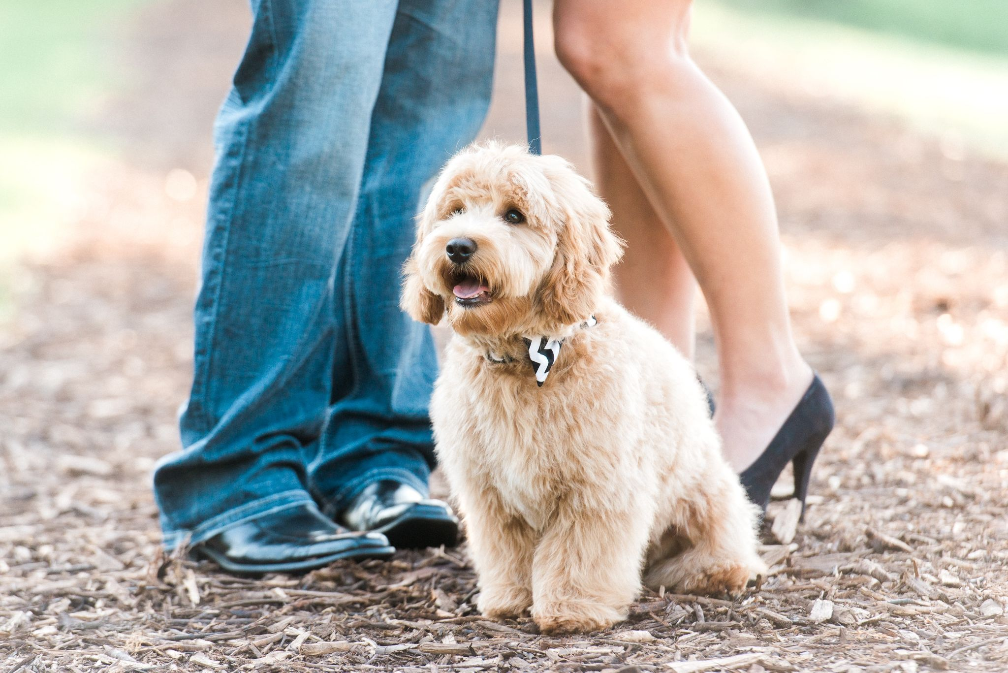 8 TIPS FOR INCLUDING YOUR DOG IN YOUR ENGAGEMENT PHOTOS