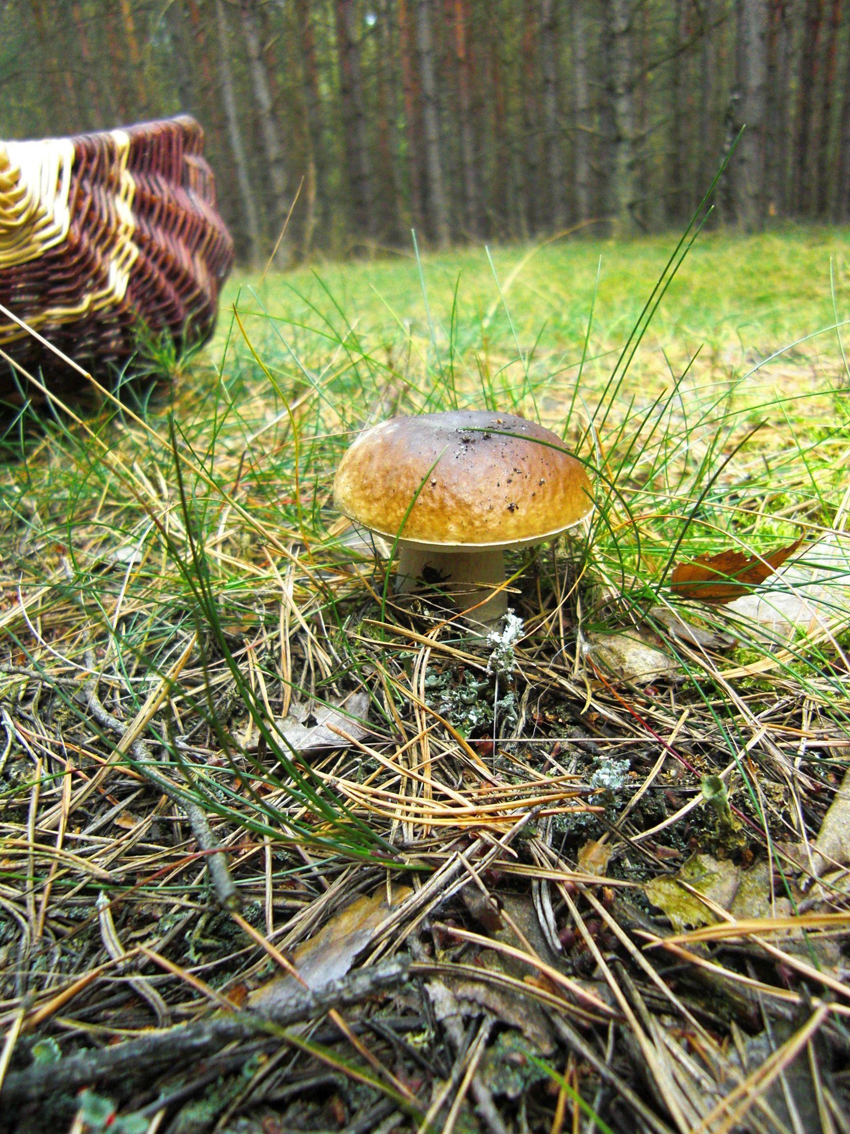 Pilze Sammeln Macht Glucklich Stuffed Mushrooms Woodlands Cottage Porcini Mushrooms