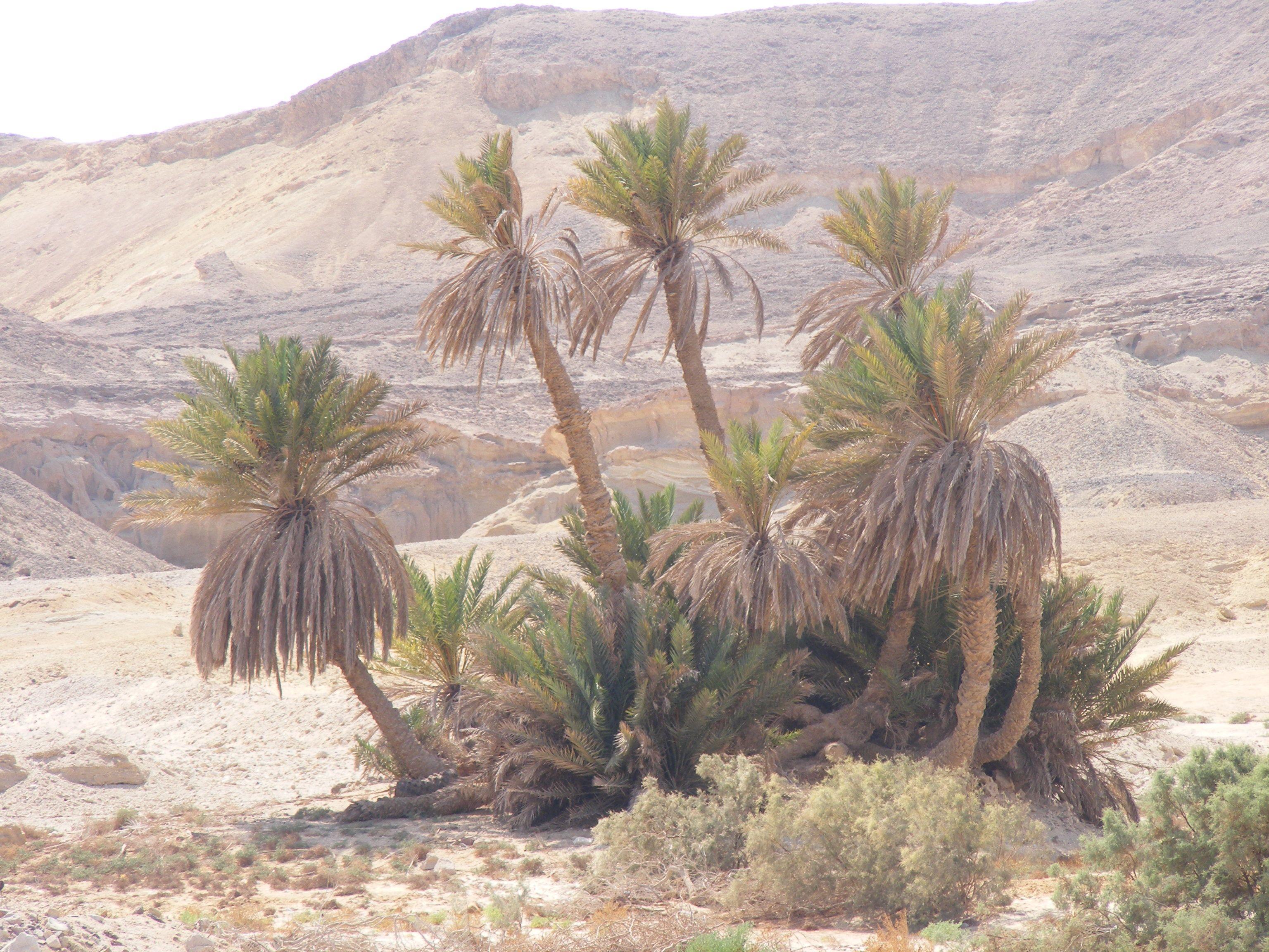 وطور سينين وهذا البلد الأمين طور سيناء وجبل موسى تصويرى Cactus Plants Plants Cactus