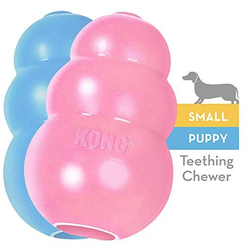 Kong Pet Kong Toy Small Assorted Pink Blue Absolute Everything