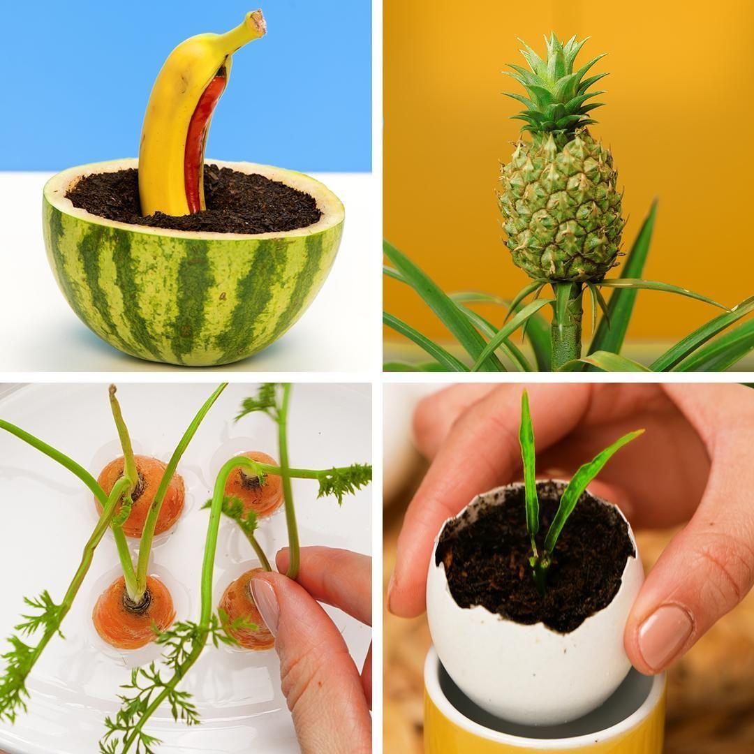 Transforme as sobras de alimentos em lindas planta