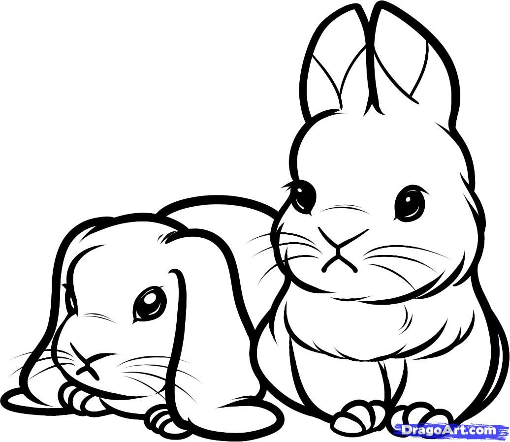 How To Draw Baby Rabbits, Baby Rabbits, Step By Step, Forest Animals,