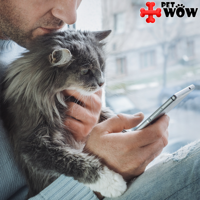 PetWow's mobile vet service offers a complete solution for