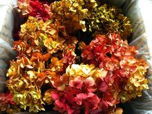 Hydrangeas Dried Autumn Burgundy Cream Mustard Painted Designer Flowers