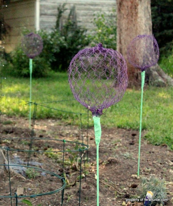 This Site Has The Tutorial The Feral Turtle: Giant Allium Chicken Wire  Flowers