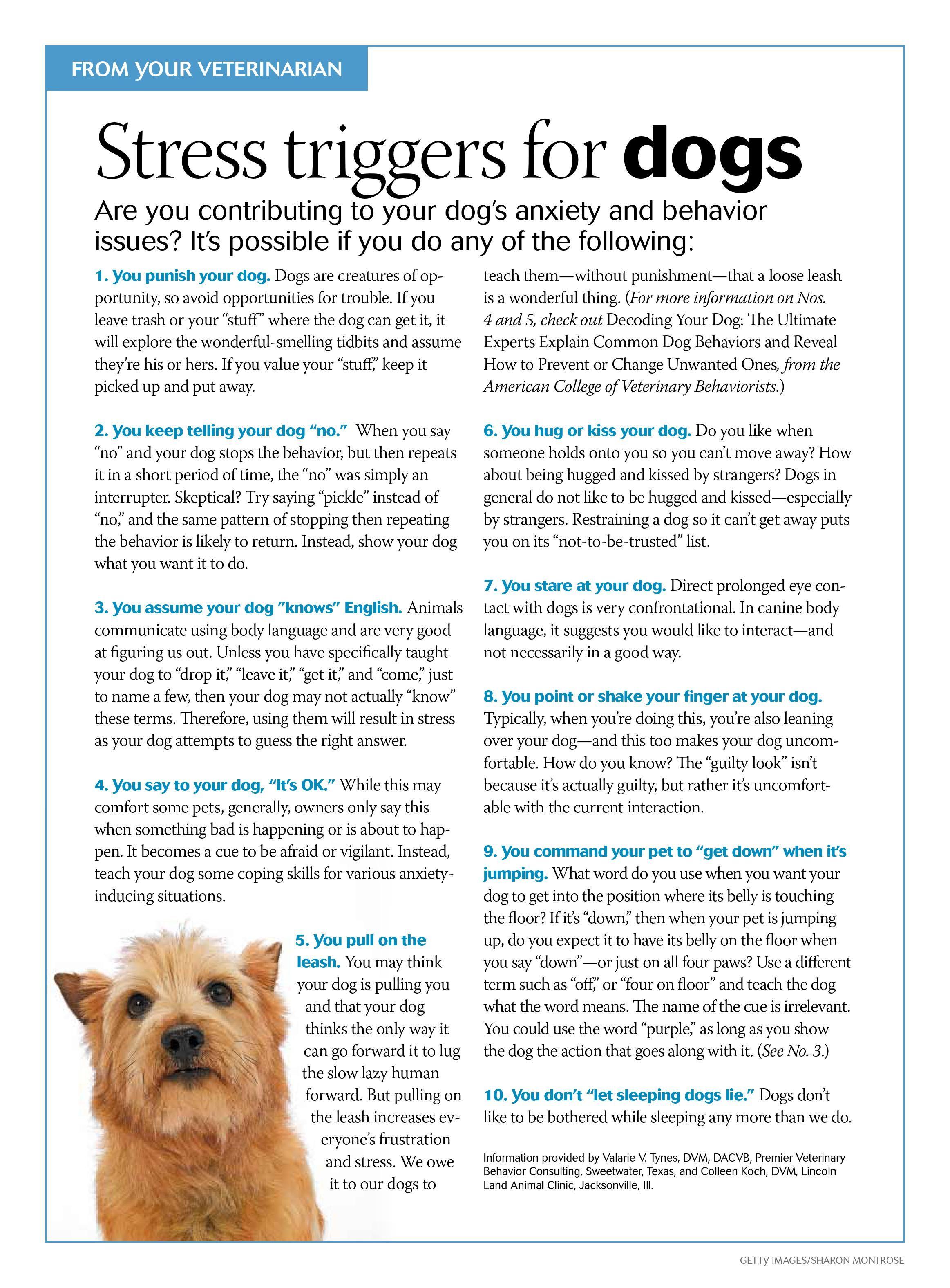 stress triggers for dogs dvm360 Meds for dogs, Dogs