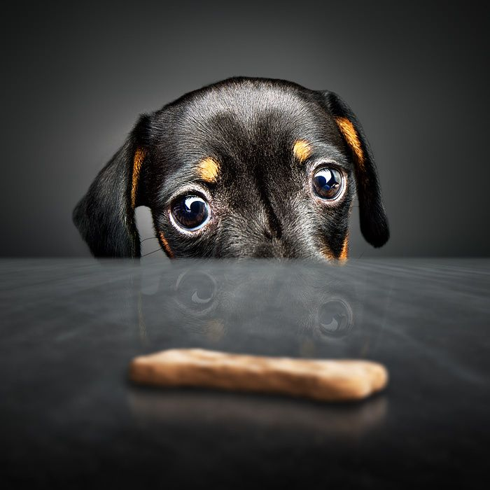 Puppy longing for a treat by Johan Swanepoel