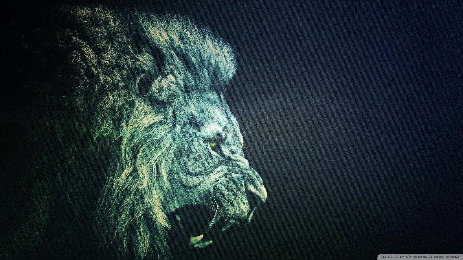 1080p Hd Lion Full Hd Wallpaper High Quality Desktop Iphone