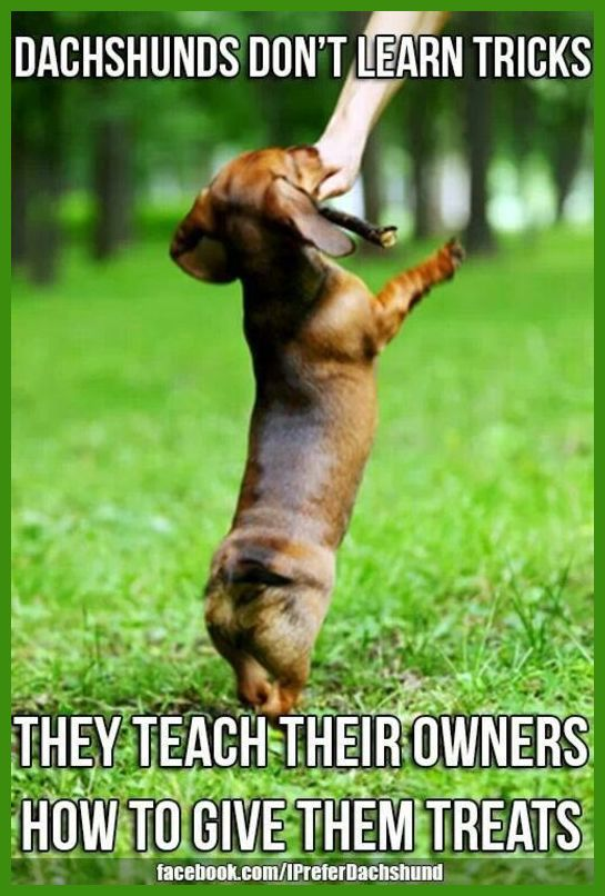 Advice For Training Your Dog Dog Training To View Further For