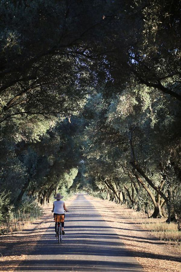 Weg + bomen