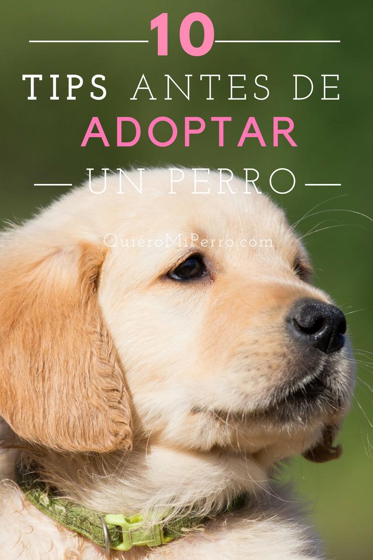 Adoptar Un Perro Qué Debo Tener En Cuenta Quiero Mi Perro Adoptar Un Perro Perros Adopción De Perro