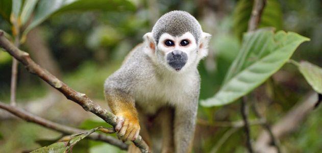 #myvho #monkey # amazon # peru #travel #vacation #homes