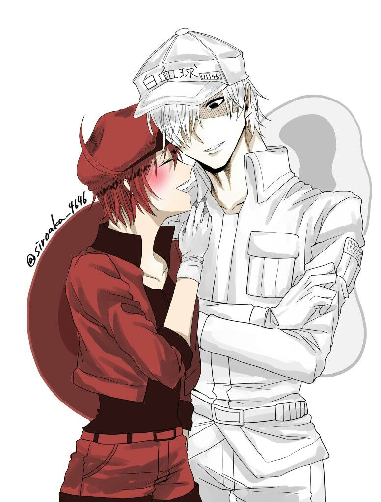 Cells at work white blood cell x red blood cell Cell