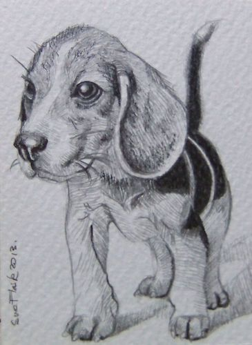 Aceo new artwork pencil drawing animal dogs   puppy by sue flask ...