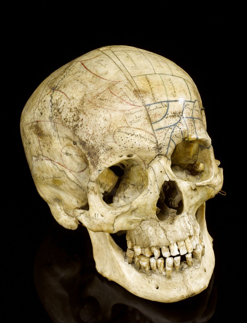 human osteology courses in the uk | the o'jays, in the uk and skulls, Skeleton