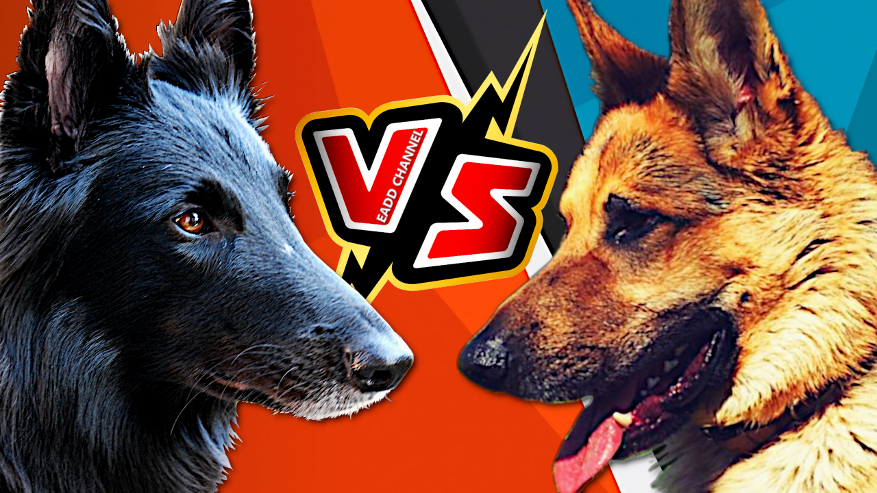 23 Ideas De Versus Entre Perros Vs Razas Caninas Perros Perros Argentinos