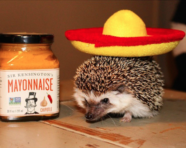 Why have we not put more sombreros on hedgehogs? They look adorable!