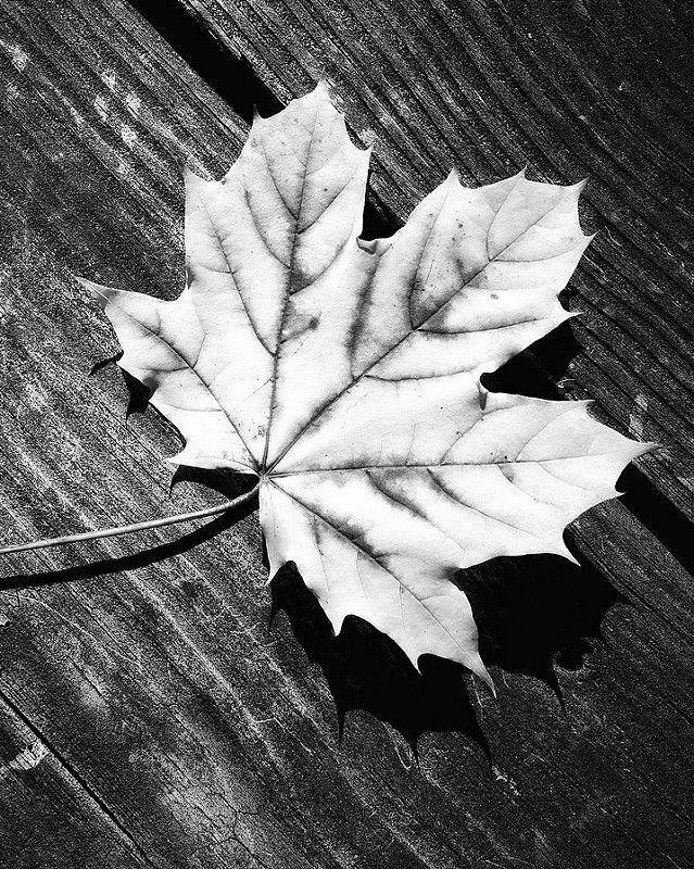 Deconstructed Minimalist Tree Nature Leaf Minimal Autumn