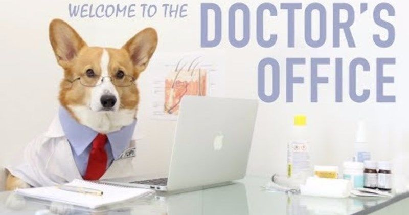 At The Dogtor Clinic Pet Insurance Reviews The Shelter Pet
