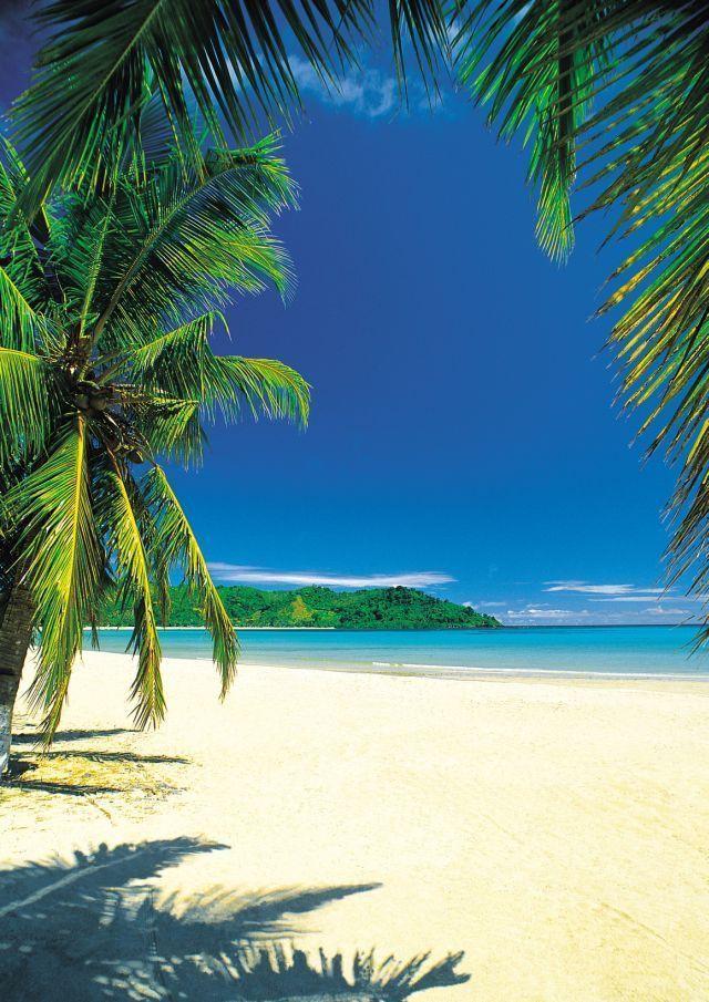 Photo of Amazon.de: Beaches – Palm Beach IntoTheBlue – Beach Poster Foto Strand Palmen Meer Paradies – Grösse