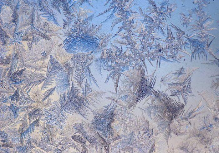 Мороз на стекле: цветочные узоры   Цветочное искусство ...