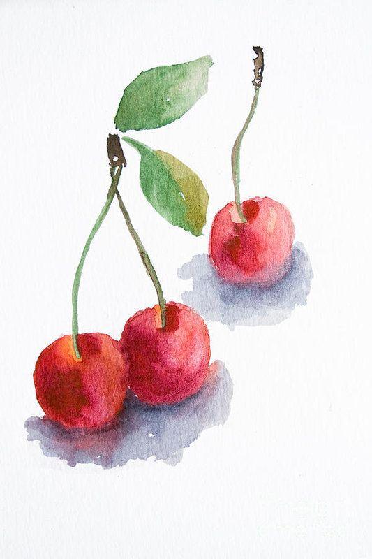 Watercolor cherry Art Print by Regina Jershova