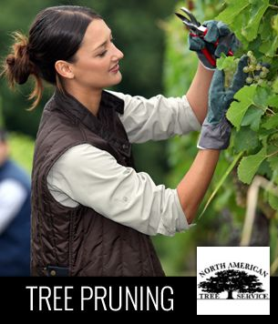 North American Tree Service  Tree Pruning http://www.kudzu.com/m/North-American-Tree-Service-733827