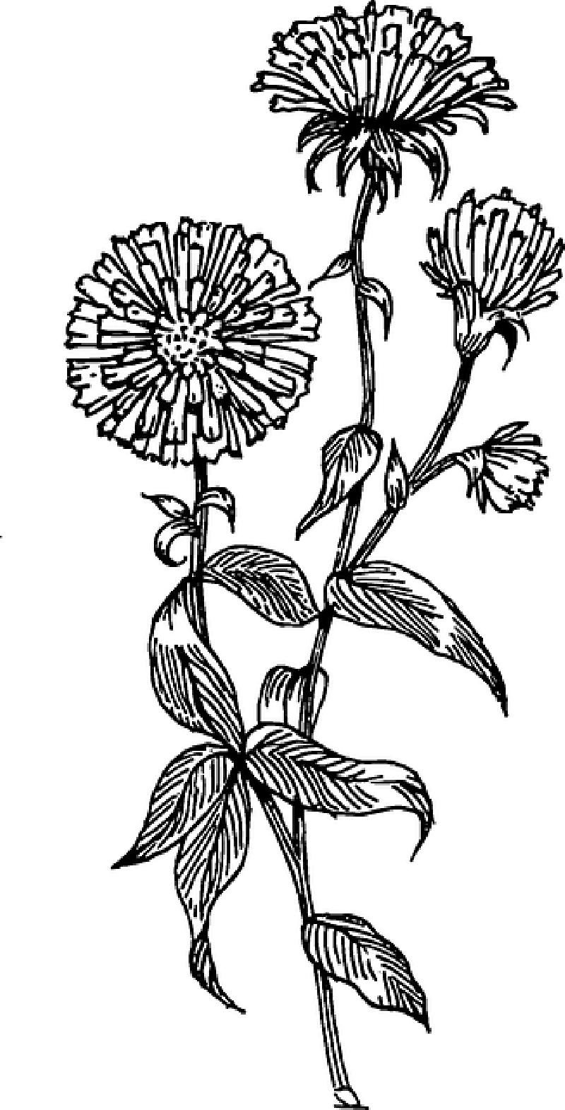 Birth Month Flowers Aster September In 2020 Birth Flower Tattoos Aster Flower Tattoos Small Flower Tattoos