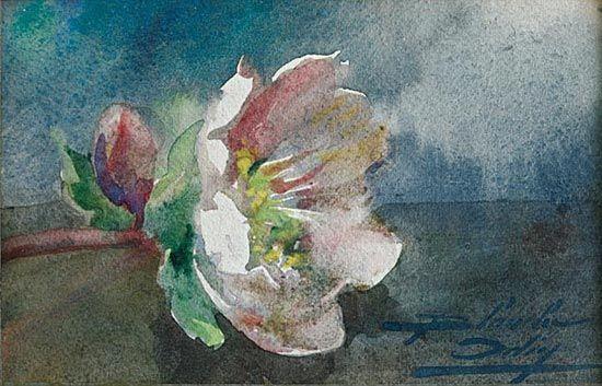 Aquarelle De Blanche Odin Rose De Noel Watercolor Pinterest